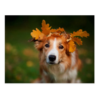 Red Border Collie With a Garland of Autumn Leaves Postcard