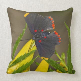 Red-bordered Pixie on esperanza brush Throw Pillow