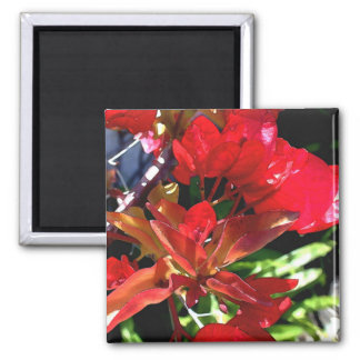 Red Bougainvillea Magnet