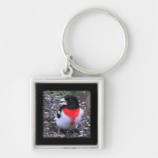 Red Breasted Gross beak  Songbird Keychain