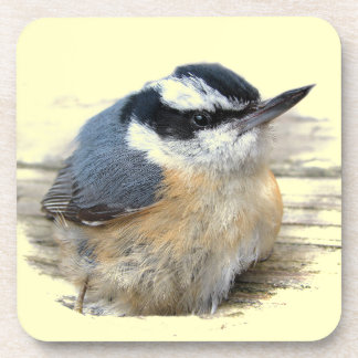 Red-breasted Nuthatch Beverage Coaster