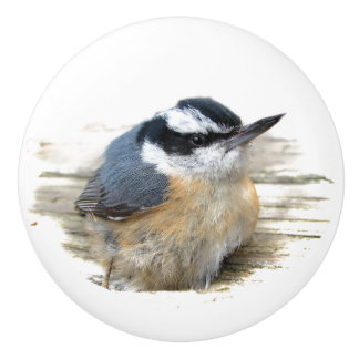 Red-breasted Nuthatch Ceramic Knob