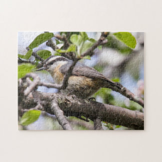 Red-breasted Nuthatch Jigsaw Puzzle