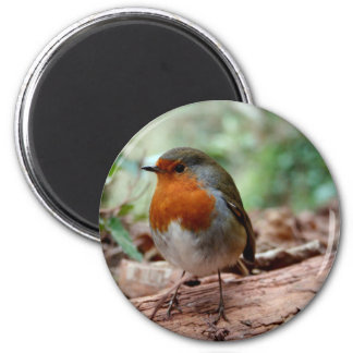 Red-breasted Robin on a Limb Magnet
