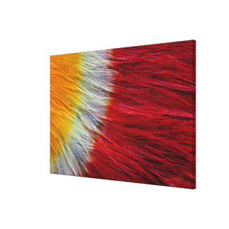 Red Breasted Toucan Feather Abstract Canvas Print
