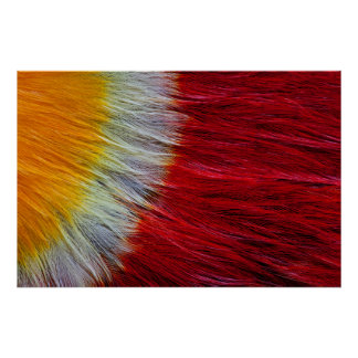 Red Breasted Toucan Feather Abstract Poster