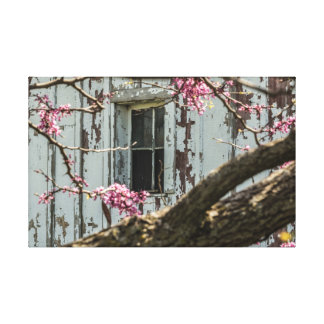 Red Bud Framing a Barn Window Canvas Print