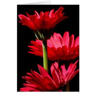 Red Burgundy Gerbera Daisy Greeting Card