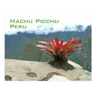 Red bush, Machu Picchu, Peru Postcard
