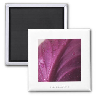 Red Cabbage Magnet