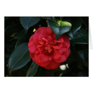 """Red Camellia # 1"" Card"