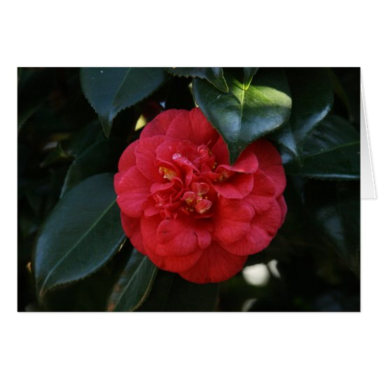 """""""Red Camellia # 1"""" Card"""