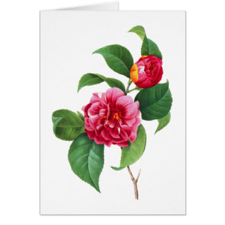 Red Camellia by Pierre Joseph Redoute Card