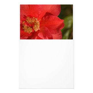 Red Camellia Flower Personalized Stationery