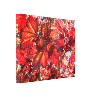 Red Canadian Maple Leaves Canvas Print