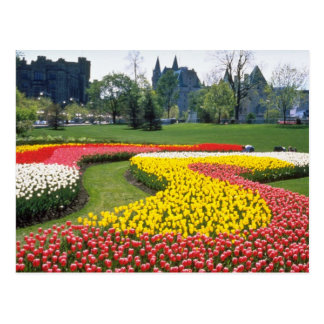 Red Canadian Tulip Festival, Major Hills Park, Ott Postcard