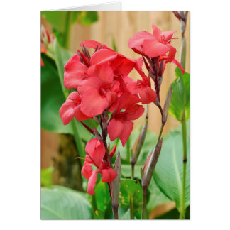 Red canna flowers card
