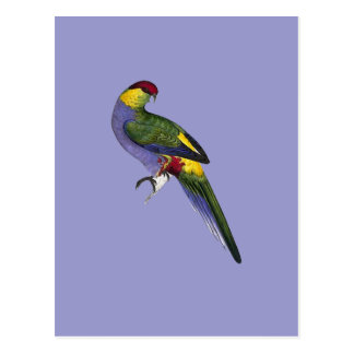 Red Capped Parakeet Parrot Bird Postcard
