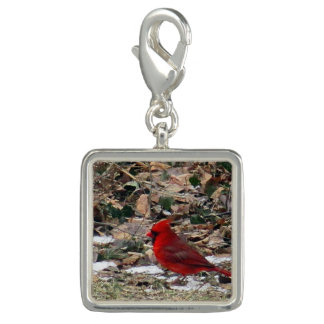 Red Cardinal Bird in Leaves Photo Charms