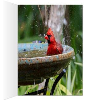 red cardinal card