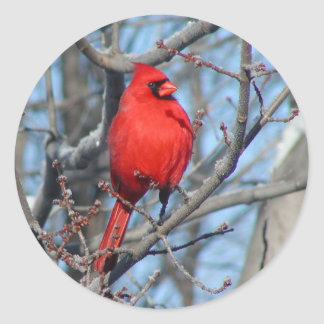 Red Cardinal Classic Round Sticker