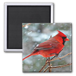 Red Cardinal in the Snow Magnet