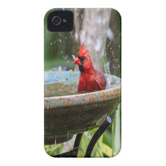 red cardinal iPhone 4 Case-Mate case