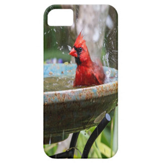 red cardinal iPhone 5 cover