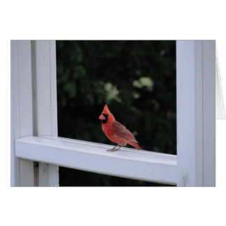 Red Cardinal, Missing You Card