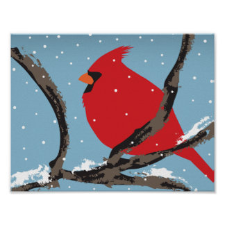 Red Cardinal On A Branch Poster
