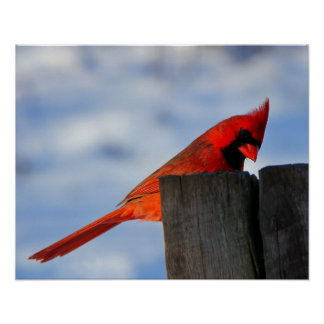 Red Cardinal on Wooden Stump Poster