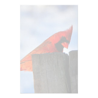 Red Cardinal on Wooden Stump Stationery