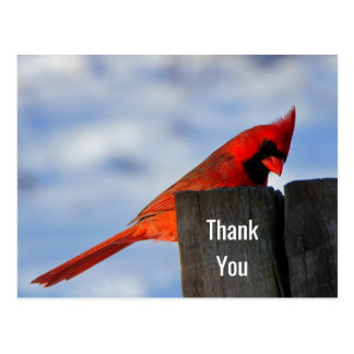 Red Cardinal on Wooden Stump Thank You Postcard