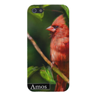 Red Cardinal Painting iPhone 5/5S Case