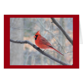 Red Cardinal Profile Card