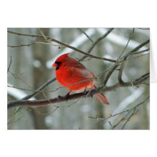 Red Cardinal Side View(Male) Card