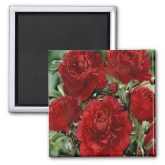 Red Carnation Flowers Magnet