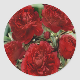 Red Carnation Flowers Stickers