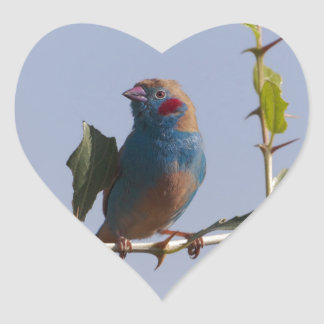 Red cheeked Cordonbleu (Uraeginthus bengalus) Heart Sticker