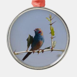 Red cheeked Cordonbleu (Uraeginthus bengalus) Metal Ornament