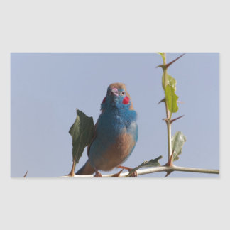 Red cheeked Cordonbleu (Uraeginthus bengalus) Sticker