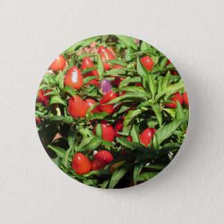 Red chili peppers hanging on the plant 2 inch round button