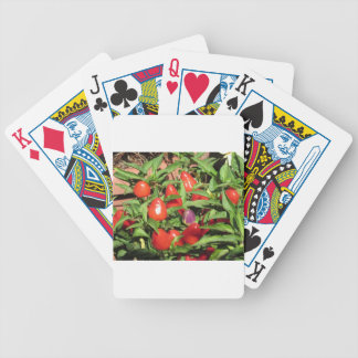 Red chili peppers hanging on the plant bicycle playing cards