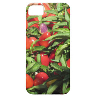 Red chili peppers hanging on the plant case for the iPhone 5