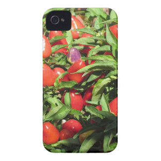 Red chili peppers hanging on the plant Case-Mate iPhone 4 case
