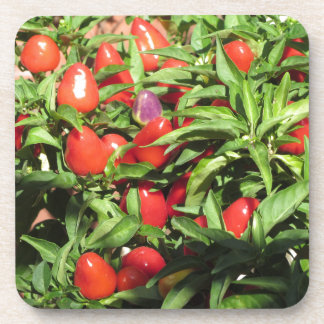 Red chili peppers hanging on the plant coaster