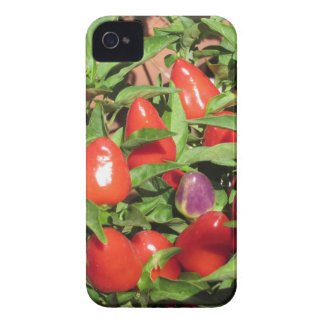 Red chili peppers hanging on the plant iPhone 4 Case-Mate cases