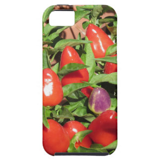 Red chili peppers hanging on the plant iPhone 5 case