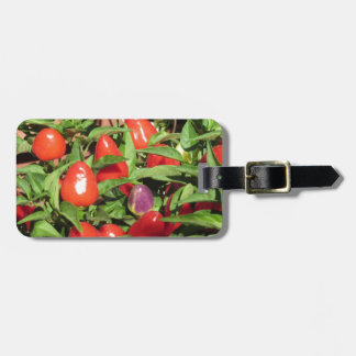 Red chili peppers hanging on the plant luggage tag