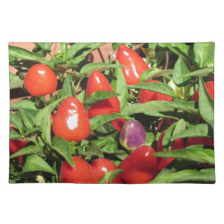 Red chili peppers hanging on the plant placemat